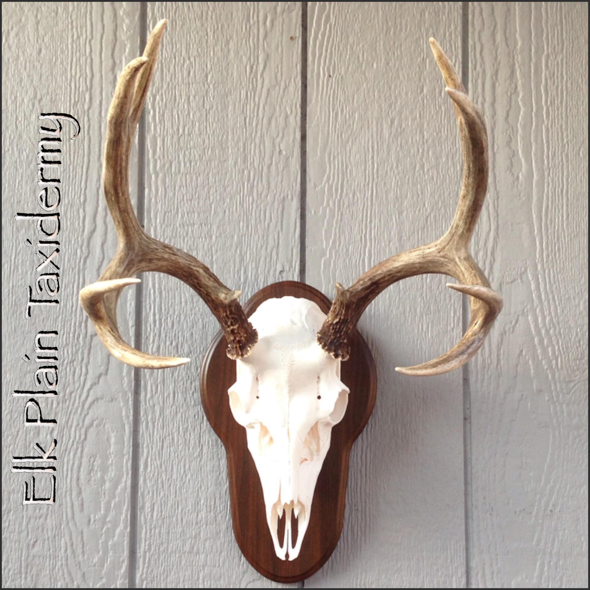 Elk Plain Taxidermy Elk Pain Wa